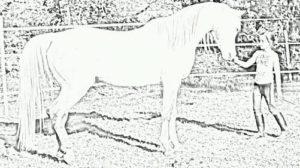 Horse-Connexion